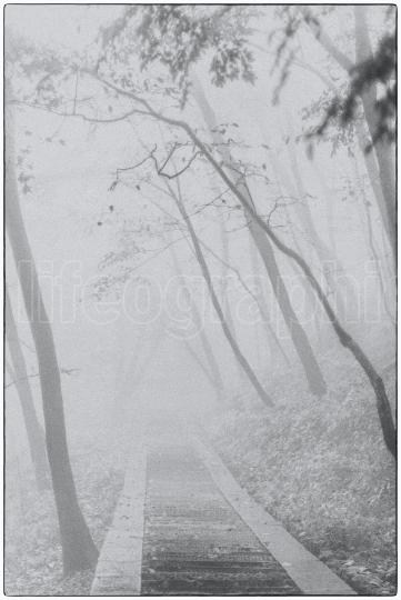 Landscape with fogy trees and narrow path inside an old forest