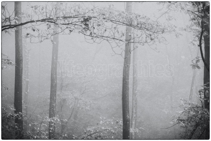 Landscape with forest covered by fog