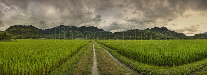 Landscape with rice fields and people