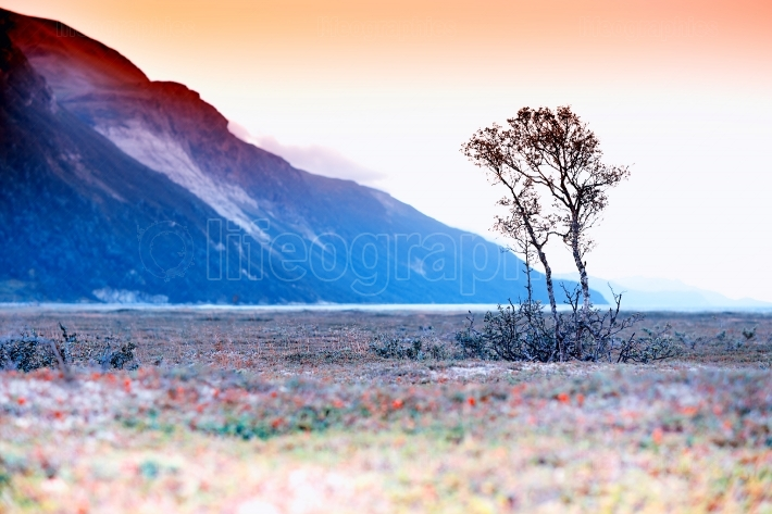 Lonely tree mountain landscape background