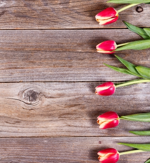 Lovely tulips on stressed wood