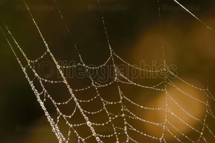 Macro Spider web with dew drops
