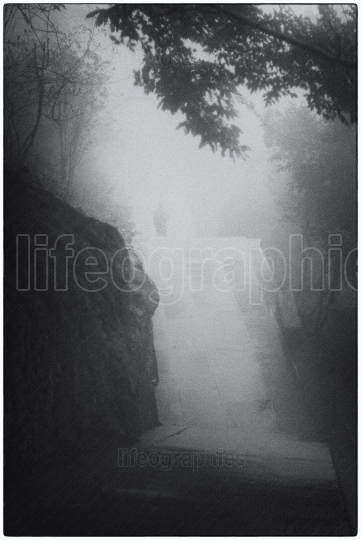 Man who carry heavy luggage into a dense fogy landscape with  trees and narrow path inside an old forest
