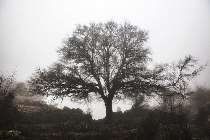 Maple tree in the fog, Torcal de Antequera
