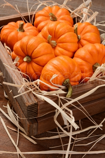 Mini Pumpkins Wood Crate