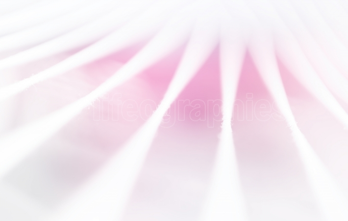 Minimal abstraction ropes with pink light leak backdrop