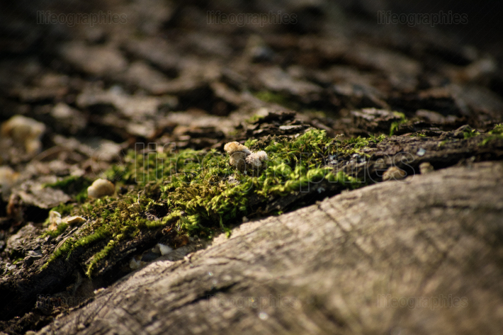 Moss on an old wooden log