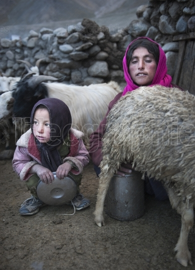 Mother and daughter milking sheep in Upper Shimshal