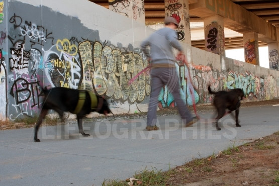 Motion Blur Of Man Walking Two Dogs In Urban Setting