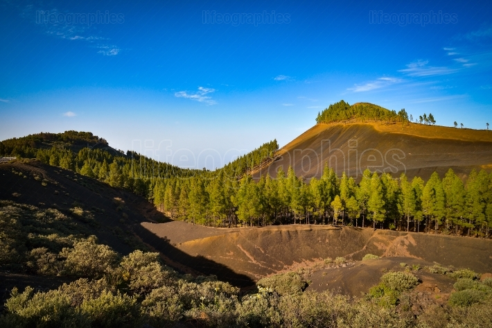 Mountain landscape with volcanic soil and pine trees in gran canaria island, spain