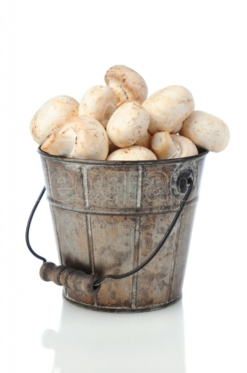 Mushrooms in Bucket