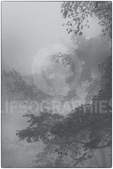Mystical  trees and fog in the Wudang Mountains. China