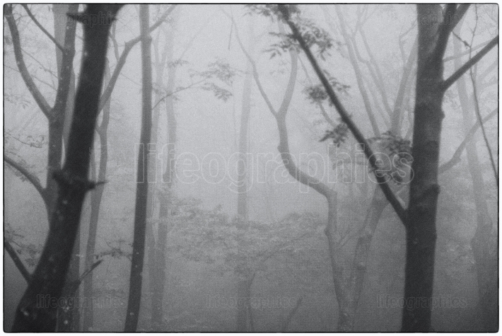 Mystical landscape with trees covered by fog