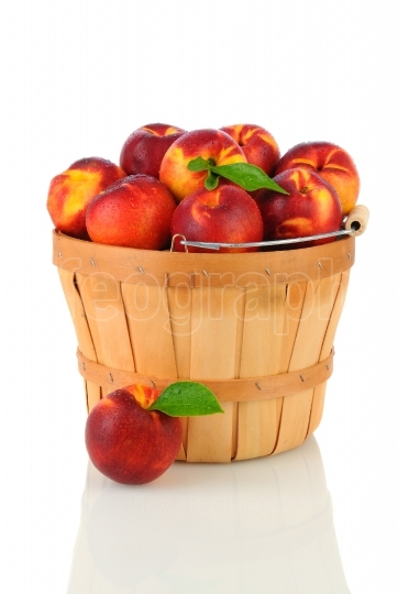 Nectarines in Basket