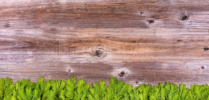 New fir tree branches on rustic wooden boards for the holiday se