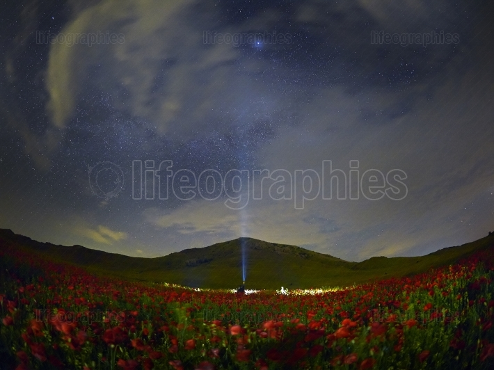 Night sky with stars over cereal field