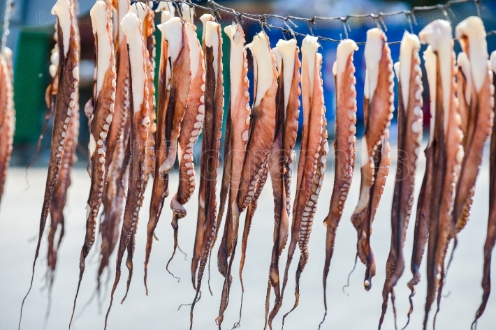 Octopus hanging to dry in the sun in thassos, greece