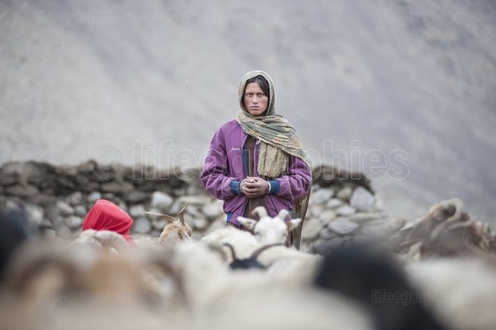 Old lady during brake pf milked sheep to produce food reserves for winter