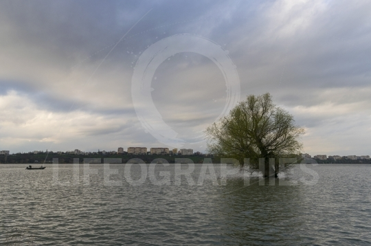 Old tree in Danube River on city background