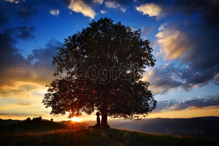 Old tree silhouette at sunset