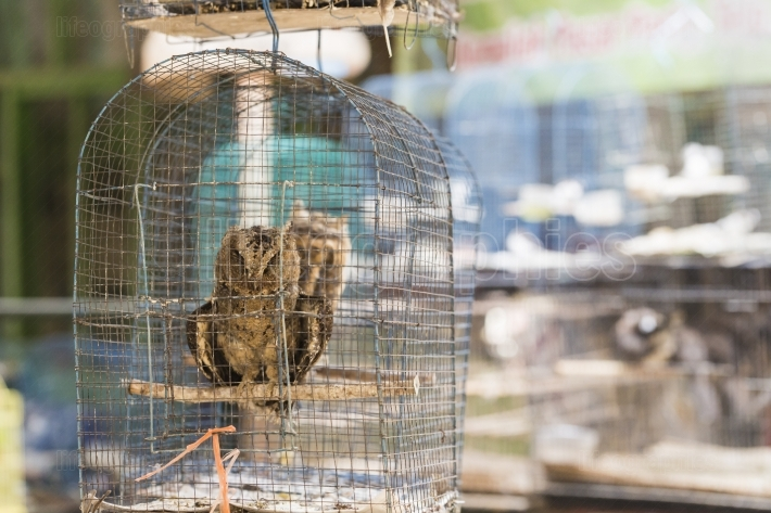 Owls are sitting in cage. Travel photo in local bird market in I