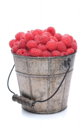 Pail of Fresh Picked Raspberries