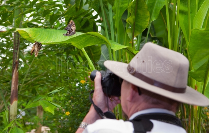 Photographing butterflies