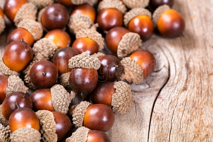 Pile of acorn decorations on rustic wood