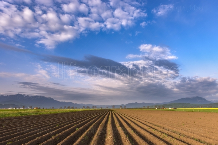 Plowed field of crops in the spring morning light, prepared to b