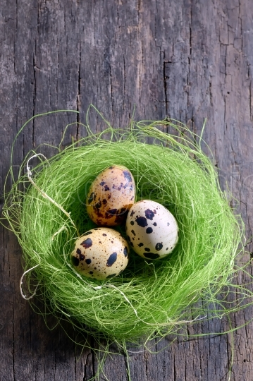 Quail's eggs in a nest