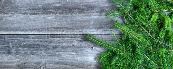 Real Christmas tree branches on weathered wooden background for