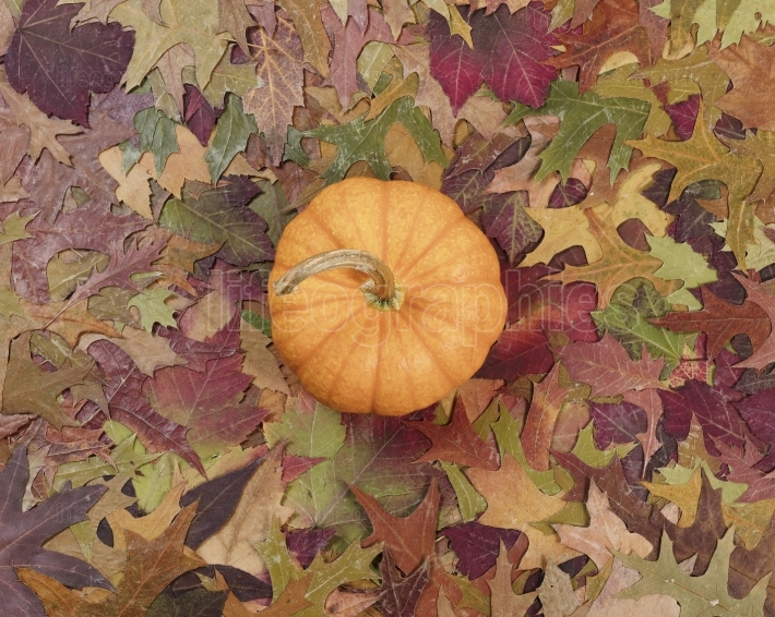 Real pumpkin surrounded with fading Autumn foliage background