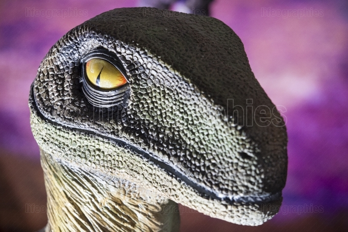 Realistic model of Velociraptor dinosaur