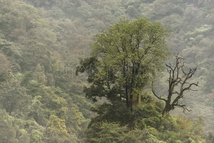 Remote tree and house in mystical Wudang Shan