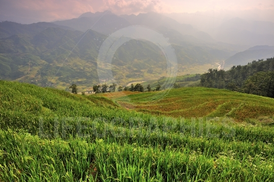 Rice field terraces in Sapa Valley
