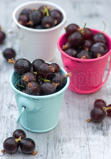 Ripe organic currant berries in little buckets