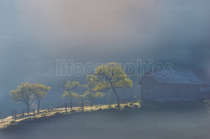 Romanian mountain landscape with fog and trees