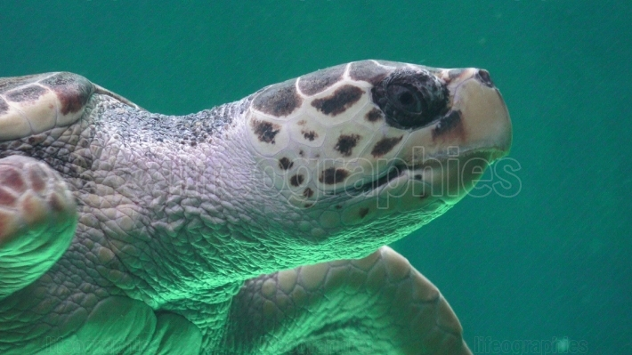 Sea Turtle Marine Life