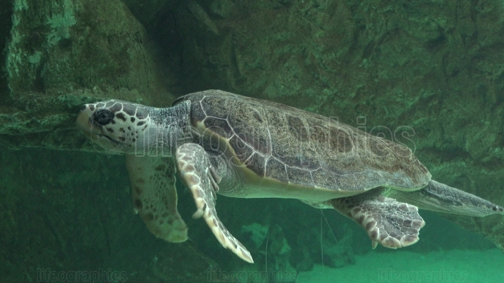 Sea Turtles And Other Marine Life
