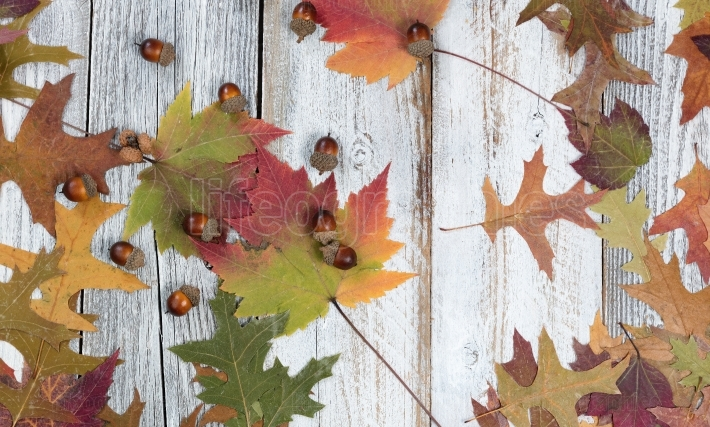 Seasonal Autumn foliage and acorns on rustic white wooden boards