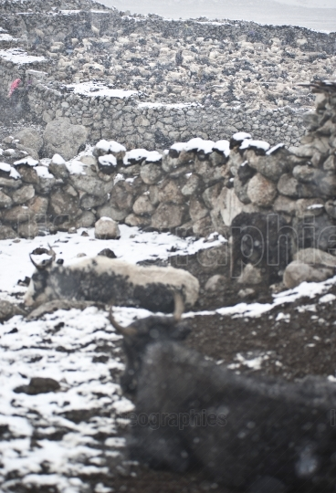 Sheep pen and small houses from Shimshal village.
