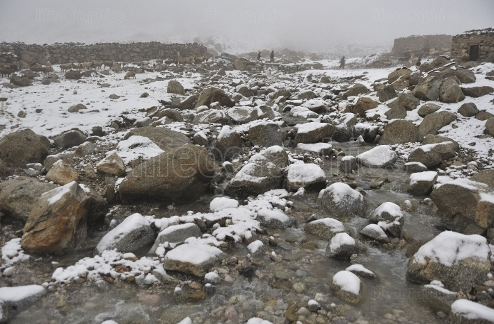 Sheeps and yaks in areas of high Karakoram Mountains