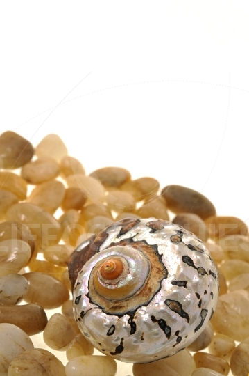Shell on stones