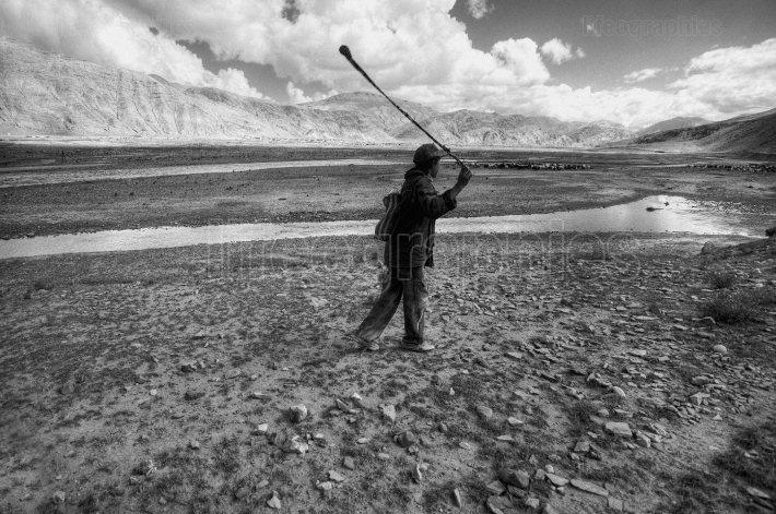 Shepherd on tibetan plateau