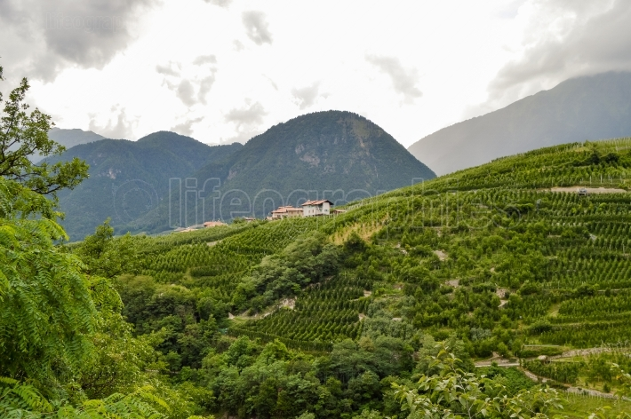 Shots of vineyards below a village in the dolomites in Italy