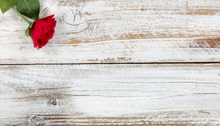 Single red rose resting on white wood
