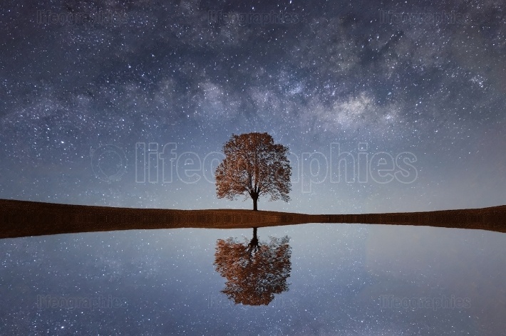 Single Tree with Milky Way