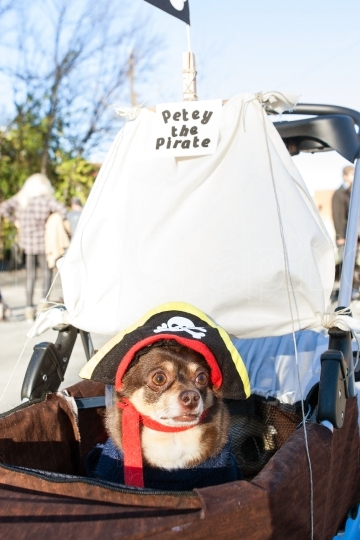 Small Dog Wears Pirate Costume At Eclectic Atlanta Parade