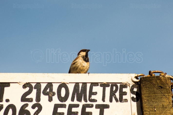 Sparrow resting on a panel in Kenya s rift valley