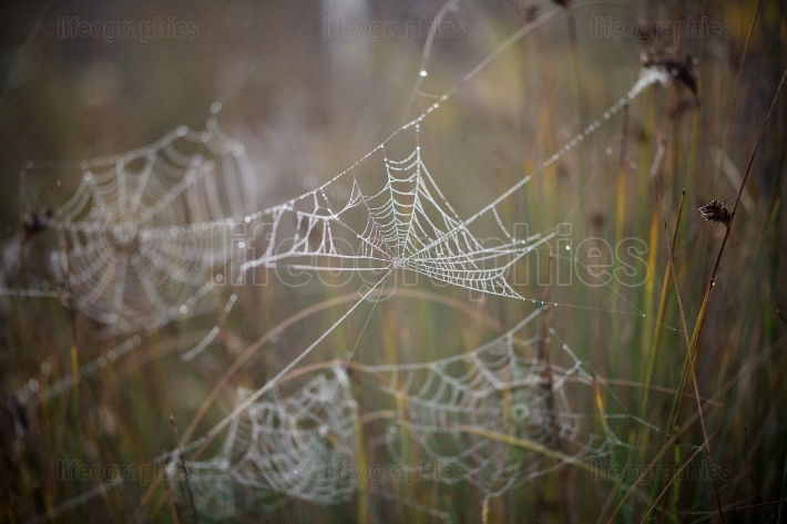 Spider web outdoor
